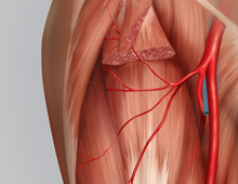 ALT Flap Vascular Anatomy